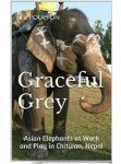 Graceful grey Asian Elephants!