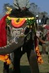 Chitwan, Nepal Elephant Festival