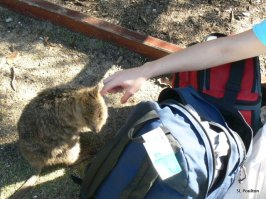 Quokka Kisses