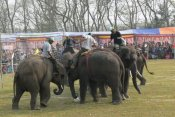 Elephant Soccer at Chitwan, Nepal