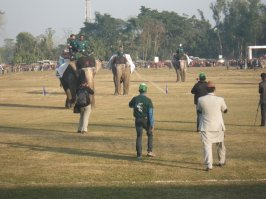 Elephant Races!
